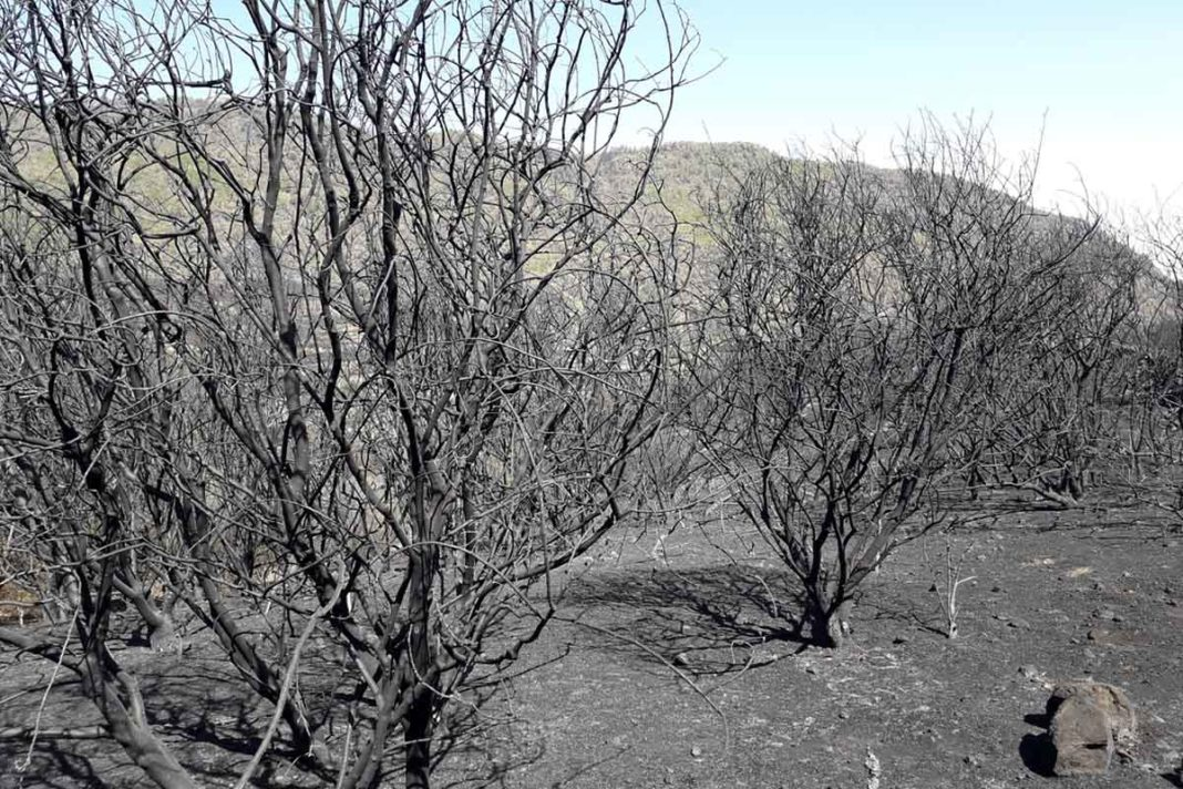Vista de terreno afectado por los pasados incendios