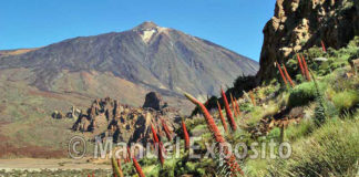 Parque Nacional de El Teide
