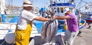 Desembarco pesca de atún. Cedida. NOTICIAS 8 ISLAS.