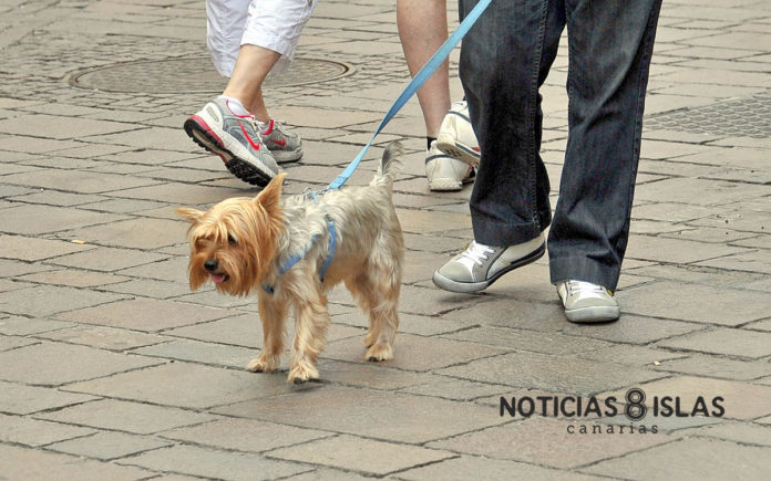 Mascota canina. Manuel Expósito. NOTICIAS 8 ISLAS.