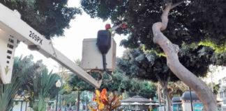 Poda del arbolado en Santa Catalina. Cedida. NOTICIAS 8 ISLAS.