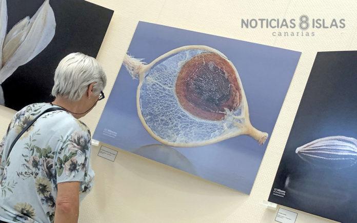 Exposición 'Semillas' de Facundo Cabrera./ Manuel Expósito.