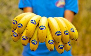 Plátano de Canarias. Cedida. NOTICIAS 8 ISLAS.