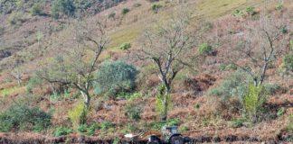 Terrenos en explotación agricola. Cedida. NOTICIAS 8 ISLAS.