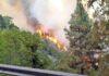 Pasado incendio forestal en Gran Canaria, año 2019. Cedida. NOTICIAS 8 ISLAS.