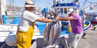 Pesca artesanal en Canarias./ Cedida.