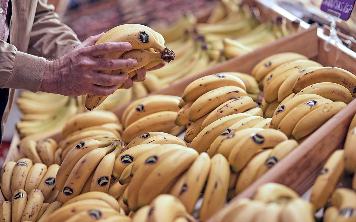 Erupción en La Palma: comunicado de los productores de plátanos de Canarias