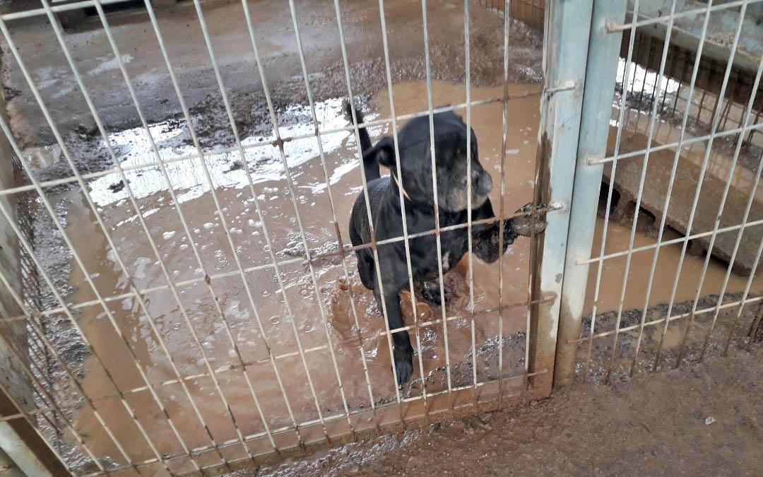Cc Pnc Denuncia La Situación Caótica Del Refugio De Tierra Blanca Por La Falta De Previsión