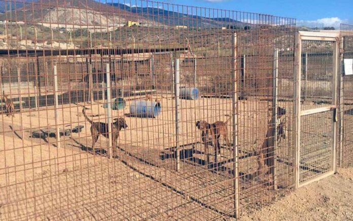 Centro de Protección Animal de Tierra Blanca./ Cedida.
