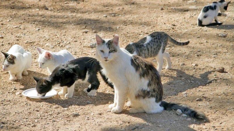 El PP denuncia la desaparición de una colonia de 27 gatos en Tacoronte