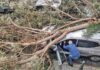 Caída de un árbol en la Calle La Naval./ Cedida.