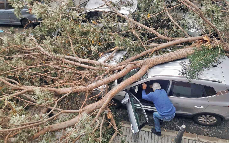 """El PP pide mejoras """"inmediatas"""" para La Isleta y su zona comercial tras la caída de un árbol el pasado fin de semana en La Naval"""