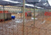 Estado en el que quedaron las instalaciones del Centro de Protección Animal de Tierra Blanca tras las lluvias./ Cedida.