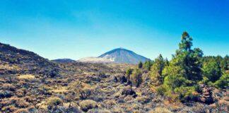 Retamas, Parque Nacional del Teide./ Cedida.