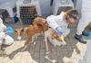 Veterinarios, intervención en animales abandonados./ Cedida.