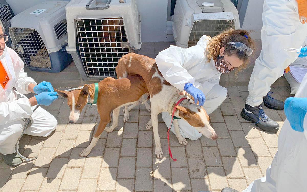 Los veterinarios de Canarias reiteran la necesidad de que sean vacunados lo antes posible
