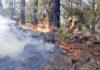 Incendio forestal de Arico./ Foto ATBRIF.